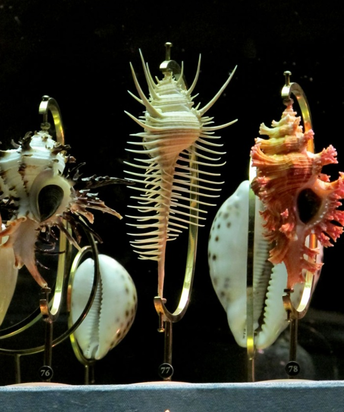 Shells, attained in 18th century