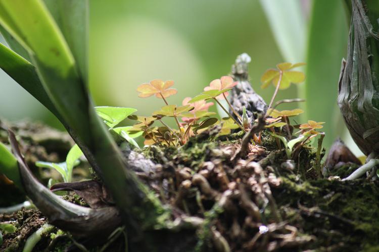 (small)BG-Roots-052(CloverFeild)