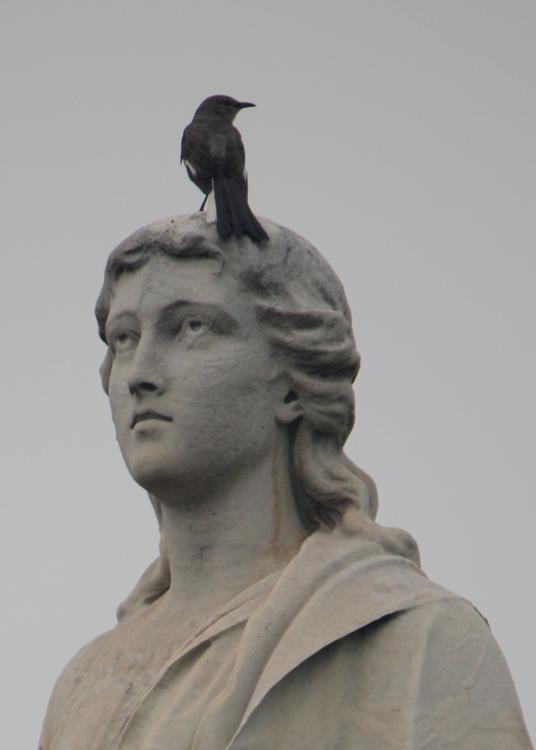 (small)OaklandCemetary-StatueWithBird(2)