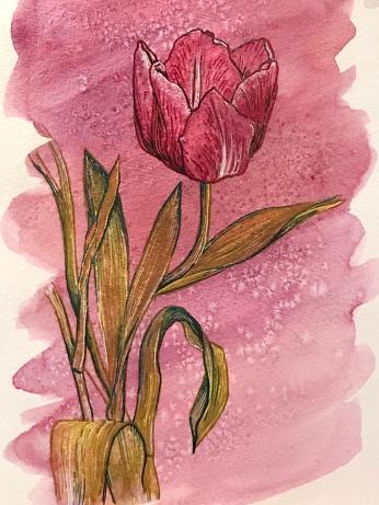 tulip-pen-sample