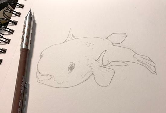steve-sketch