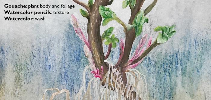 Week14-Roots(detail)