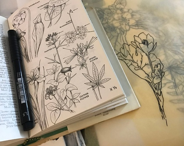 (CryTheBird)InkGesso-BotanicalDrawingsTissue