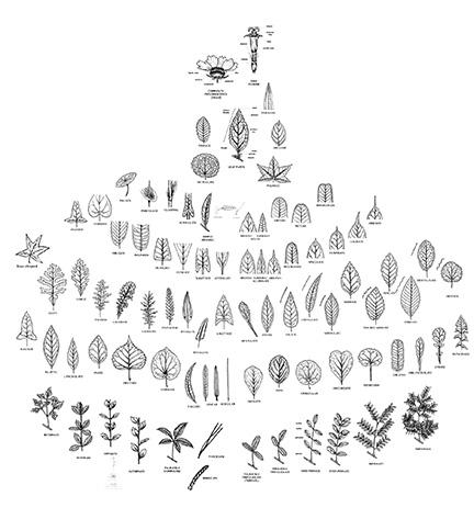 crythebird-leafpostermockup