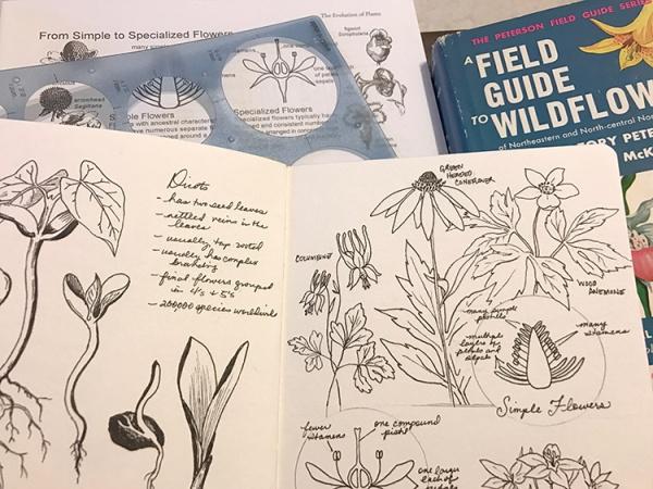 CryTheBird-wk35-BotanyIllustrations