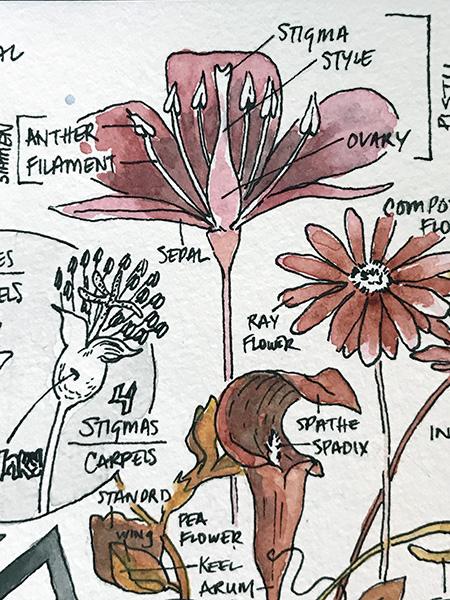 CryTheBird-Wk35-Detail-FlowerAnatomy