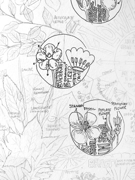CryTheBird-wk35-FlowerProfile(prelim)
