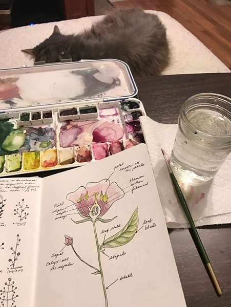 CryTheBird-wk35-FlowerStudy