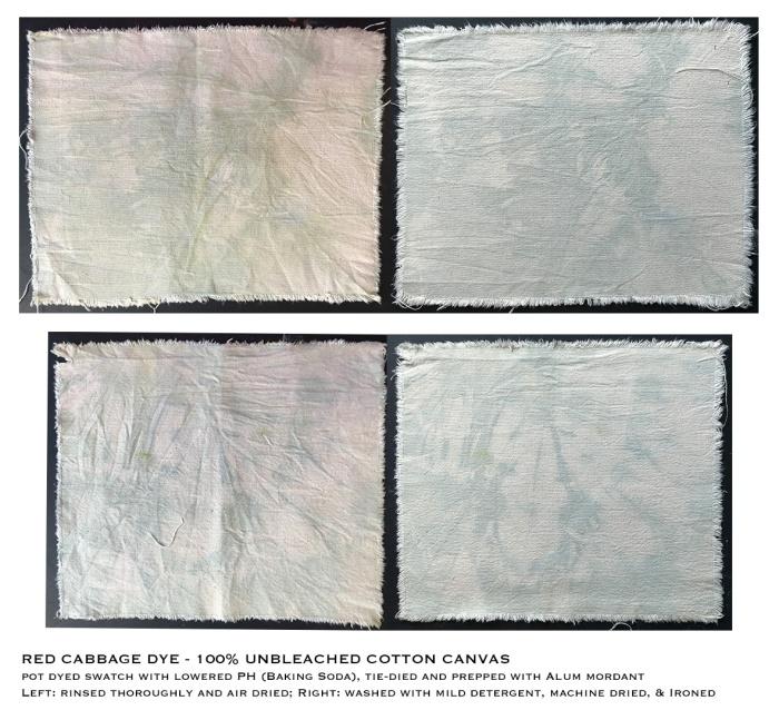 Crythebird(Levacy)-CabbageDye-Fabric(Base)